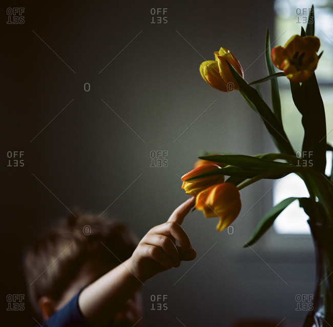 Boy touching tulips in home
