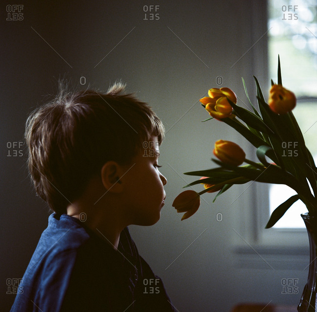 Boy looking at tulips in vase