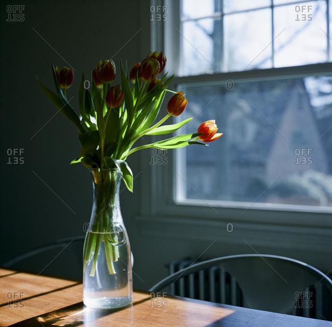 Tulips in sunlight in house
