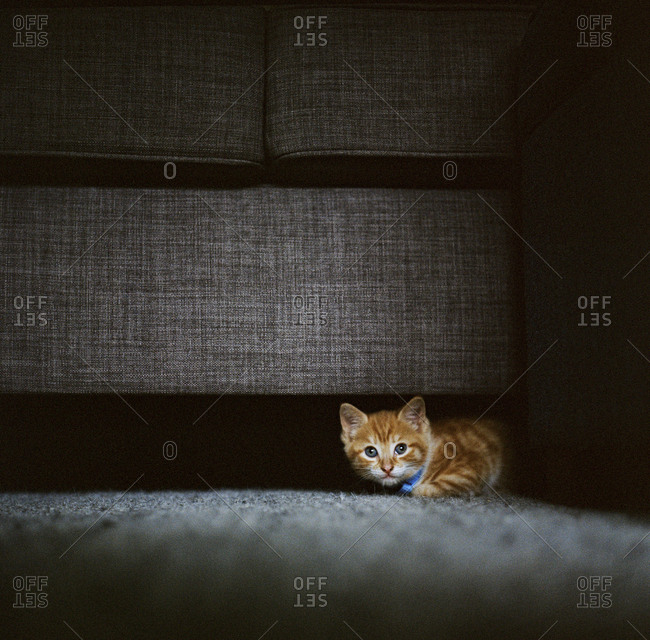 Cat underneath couch in sunlight