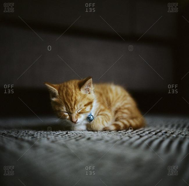 Cat lying on ground sleeping