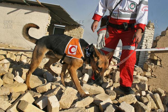 Smart dog helping emergency in the earthquake