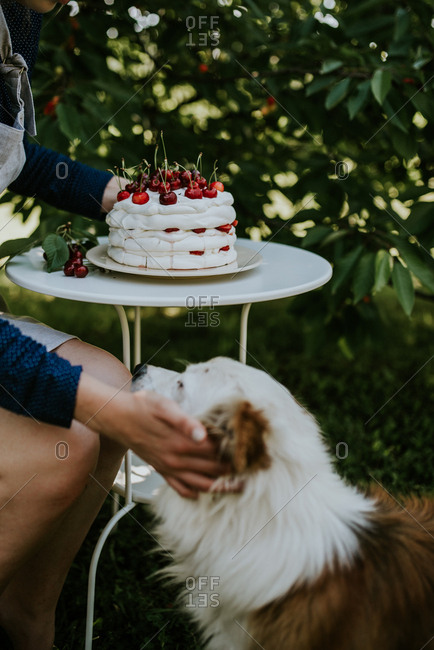 Woman placing pavlova on a table and petting a dog