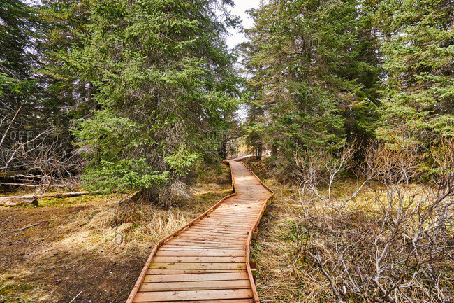 Nature trail in Homer, Alaska