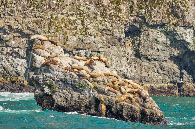 Seals lying on rocks, Kenai Fjords National Park, Alaska