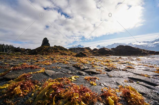 Plant strewn shore in Alaska