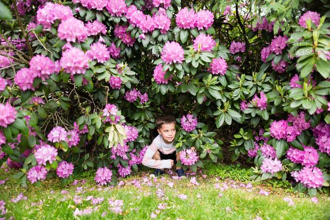 Boy under rhododendron bush