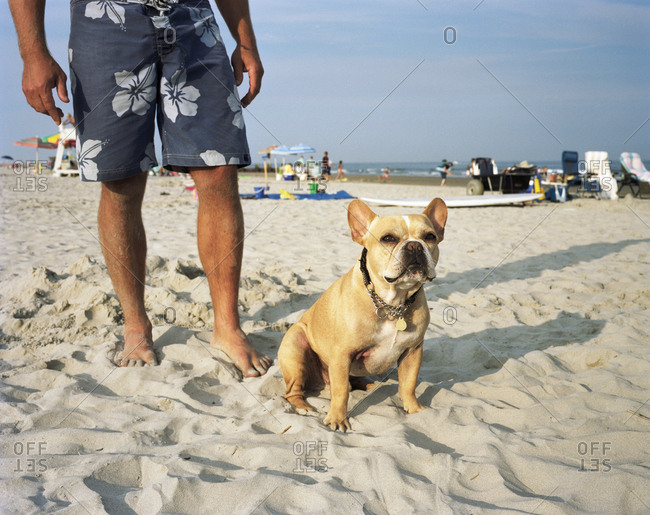 French bulldog standing on beach beside man