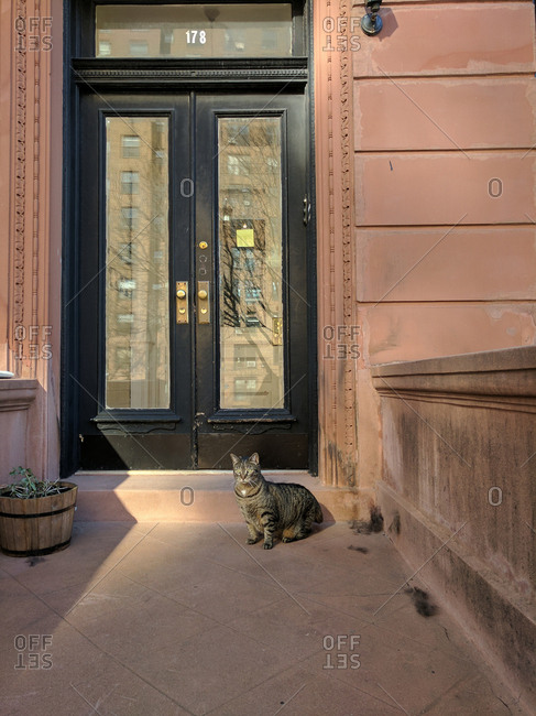Cat by front apartment door