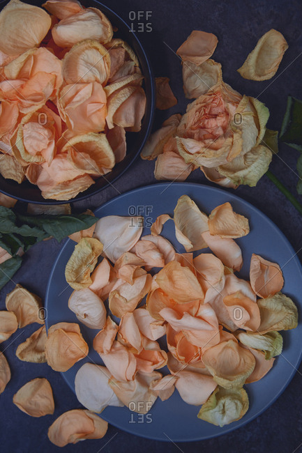 Rose flower and petals for aromatherapy