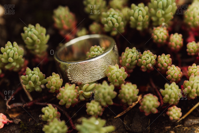 Wedding ring with fingerprint on a plant