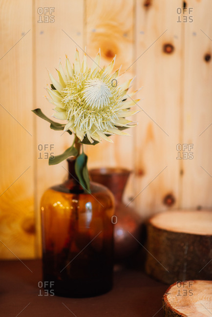 Yellow flower in a brown glass jug