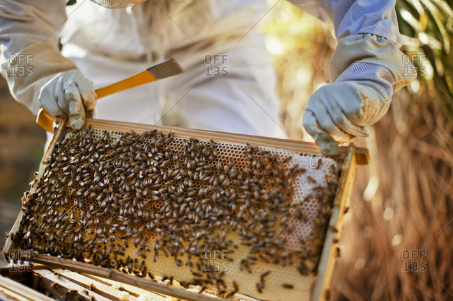A beekeeper tending to the hive