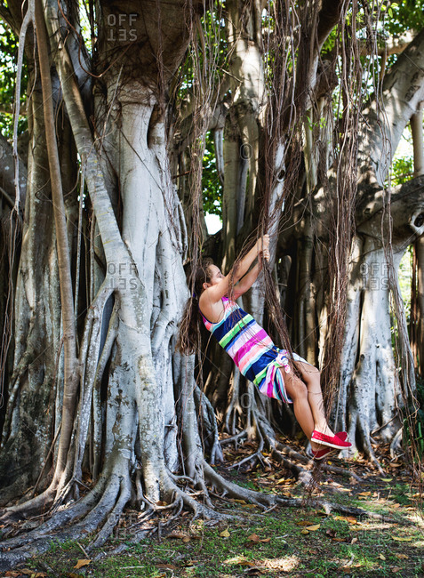 Girl swings from the vines of a banyan tree
