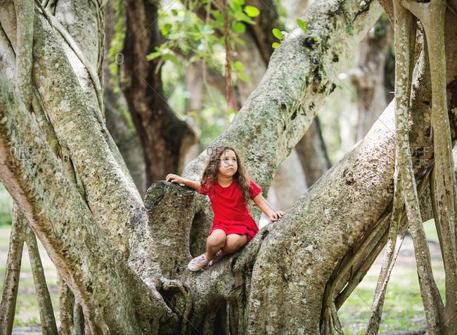 Girl climbs a banyan tree