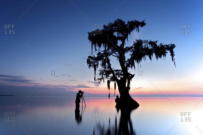 Photographer taking photo of cypress tree at sunrise