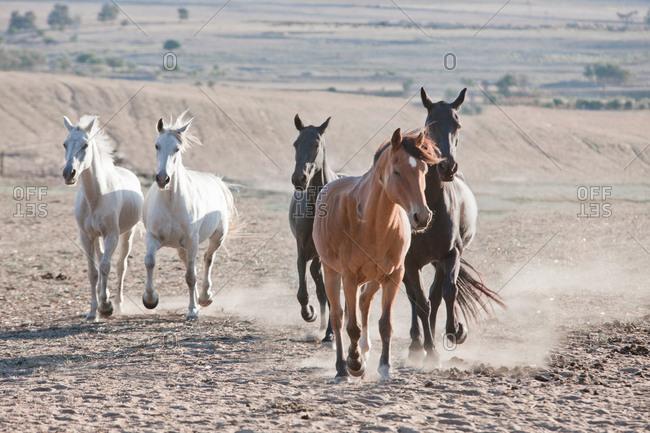 Horses running in dirt field