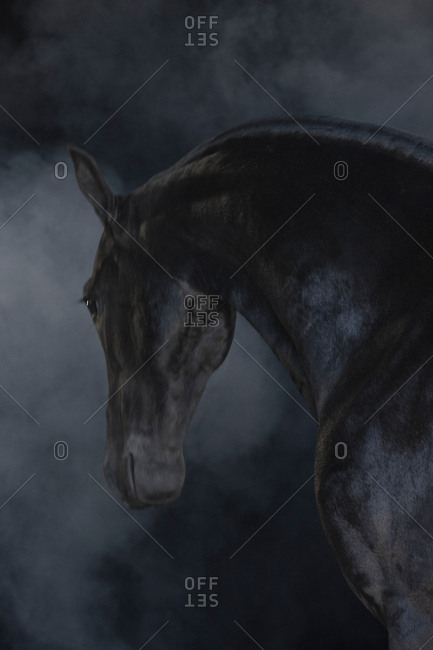 Black horse in foggy landscape