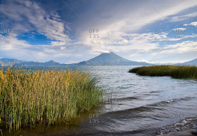 Reeds growing in lake
