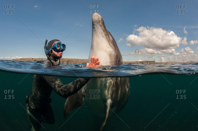 Diver scratching dolphin in water