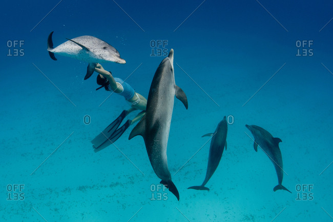 Snorkeler swimming with dolphins - Offset
