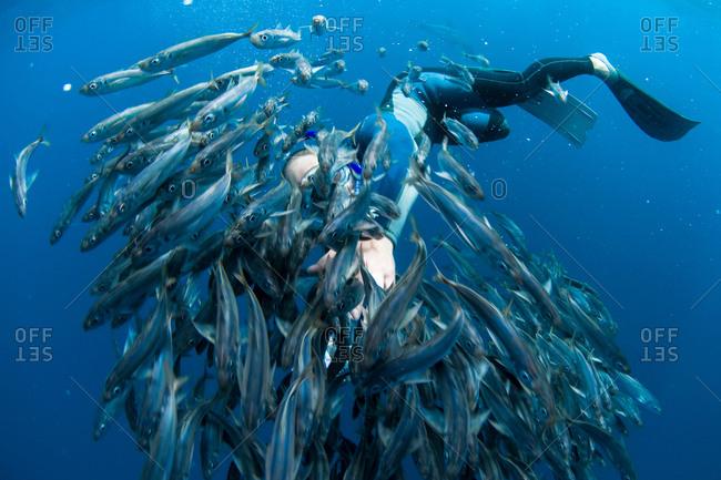 Diver swimming in school of fish