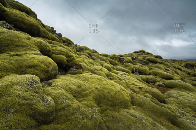 Moss growing on rocky hill