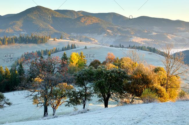 Frosty morning, Krasnik village area, Carpathian Mountains, Ivano-Frankivsk region, Ukraine