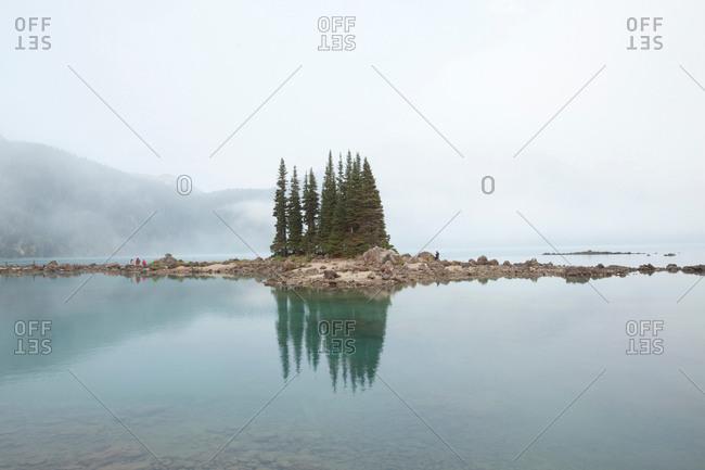 Trees in Garibaldi Lake, Garibaldi Provincial Park, British Columbia, Canada