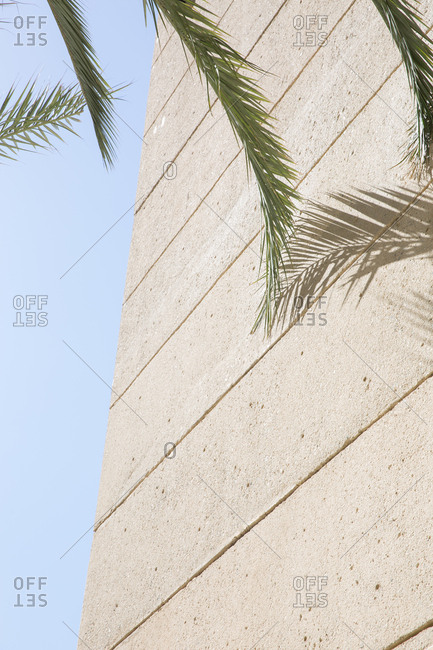 Palm tree fronds and shadow on side of building