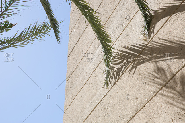Palm tree fronds brushing up against exterior of building