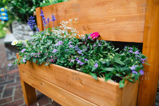 Spring flowers in planter boxes