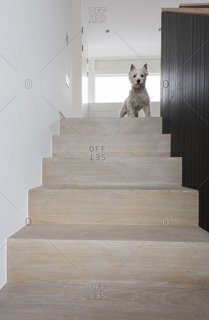 Interior view of House 19, a carbon neutral countryside house in the Chiltern Hills, South East England Dog on top of staircase