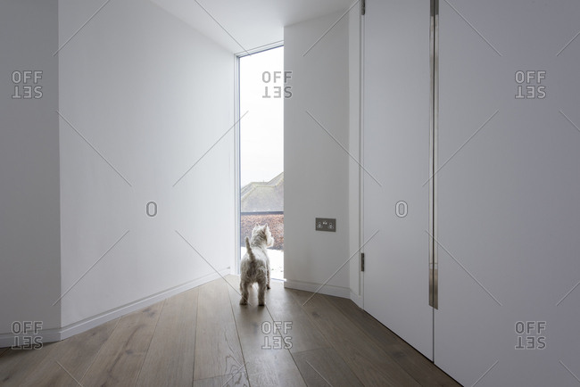Interior view of House 19, a carbon neutral countryside house in the Chiltern Hills, South East England First floor gallery, dog looking through window