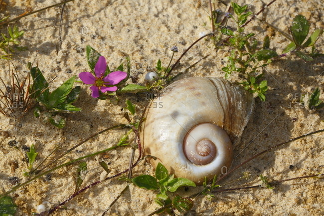 A snail shell in the sand