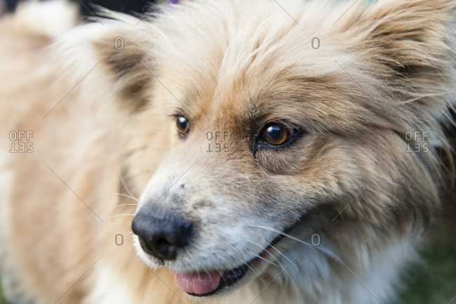 A portrait of a rescued fluffy mixed breed dog
