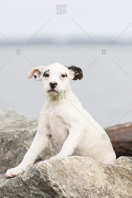 A mixed breed puppy sits on a rock wall along the Chesapeake Bay