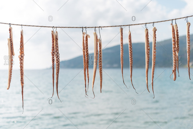 Octopus tentacles hanging to dry on the Mani peninsula in the Peloponnese in Greece