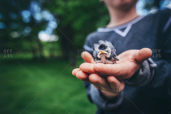 Side view of child holding tiny baby bird outside
