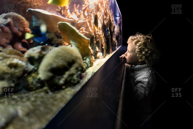 Boy with curly hair watching fish