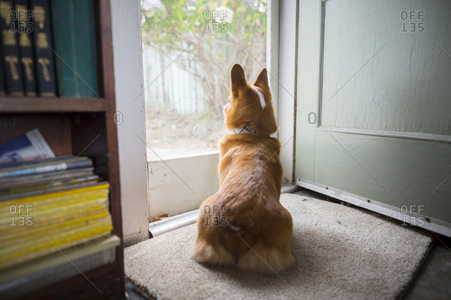 Cute dog looks outside in a small beach cabin in Salmon Creek, on the Northern California Coast