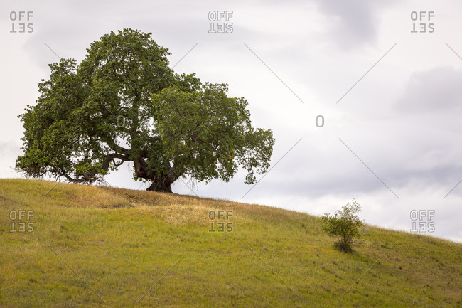 Tree on top of a hill