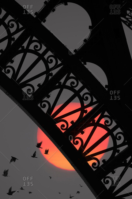 Birds and Eiffel Tower in silhouette