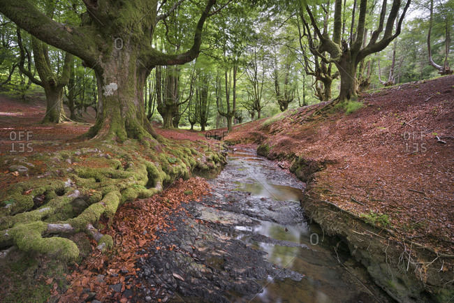 Spain- Basque Country- Gorbea Natural Park- Otzarreta forest