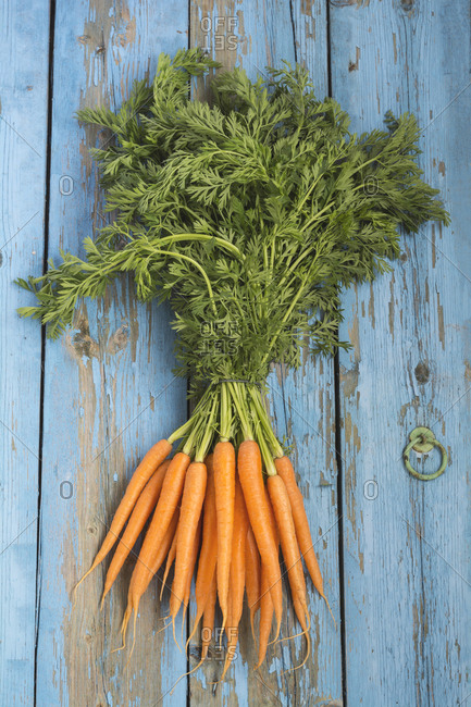 Bunch of carrots on blue wood