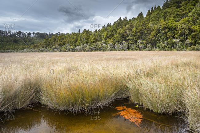New Zealand- South Island- Westcoast- Okarito lagoon