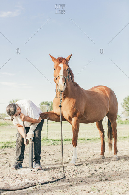Umatilla Reservation, Pendleton, Oregon - May 10, 2017: Woman filing horse's hooves