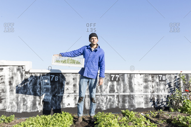 Man with crate of freshly picked salad greens