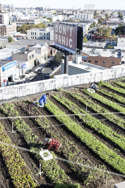 January 25, 2017: People working in a rooftop garden