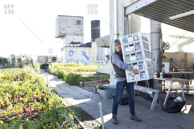 January 25, 2017: Urban rooftop farmer with crates of freshly picked lettuce